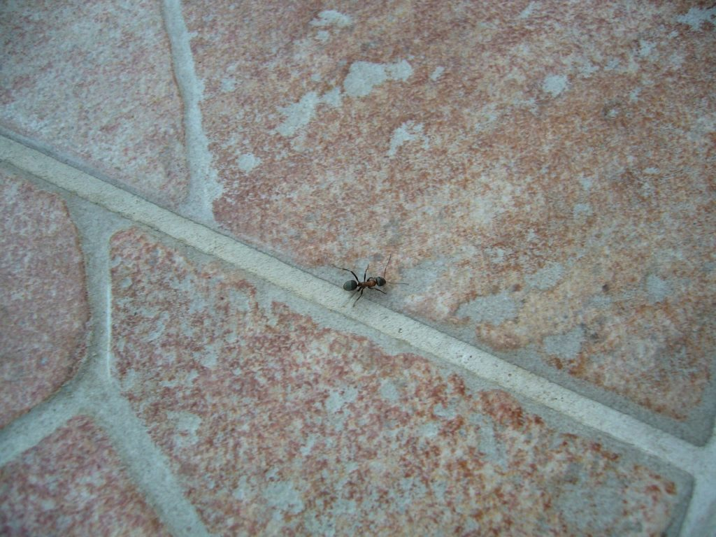 How to Ant Proof Electrical Outlets
